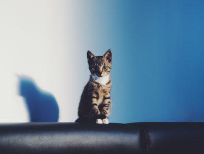 De ce pisicile sunt indicatorul bunăstării tale