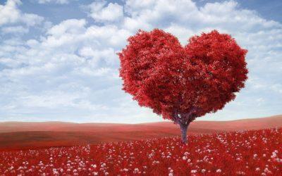 Dragostea este o artă delicată